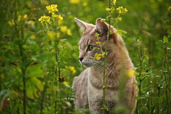 flea-infestation-on-cats-tw