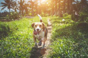 flea-infestation-in-dogs-tw