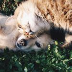 common-intestinal-parasites-in-dogs-and-cats-tw